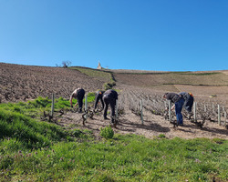 viticulteur-récoltant - Domaine Gaël Martin - Saint-Vérand