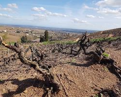 producteur de vin - Domaine Gaël Martin - Saint-Vérand